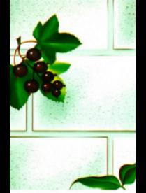 (76513) Клеенка Ткань с прозрачным ПВХ покрытием СМОРОДИНА 1,38*20м